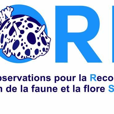 Logo DORIS