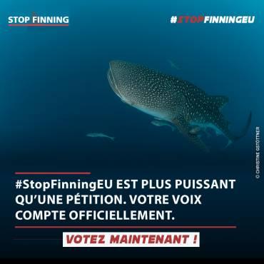 Poster officiel Stop Finning EU